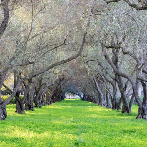 Garden-Grove-Property-Management